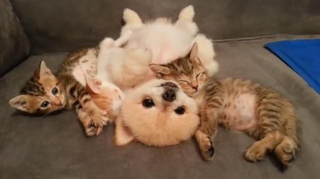 犬を中心にして寝る子猫達
