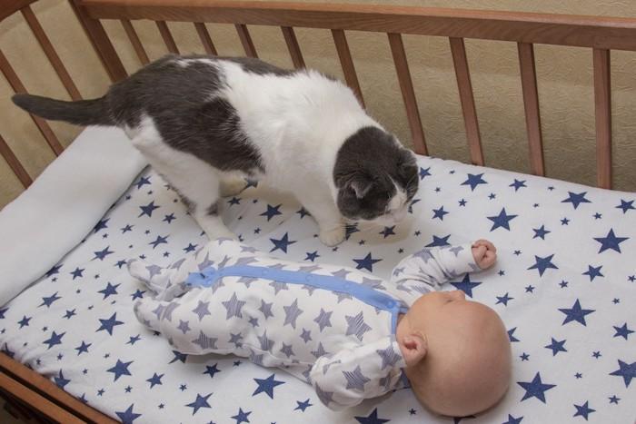 赤ちゃんのベッドに乗って匂いを嗅ぐ猫