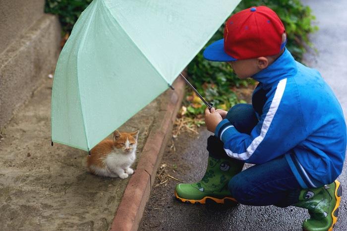子猫に傘をさす男の子の写真