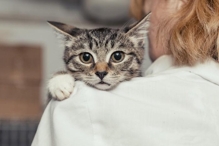 女性の肩越しに見つめる子猫