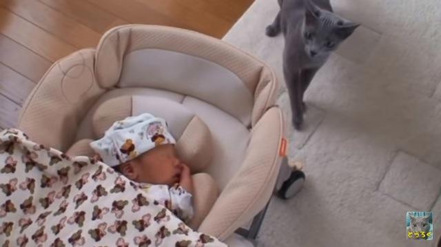 赤ちゃんに近づく猫