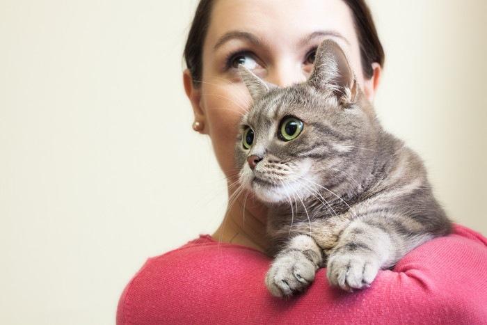 女性に抱かれるグレーの猫