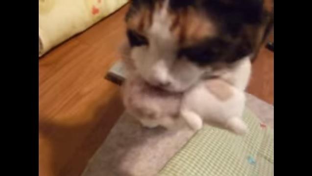 ぬいぐるみをくわえる猫