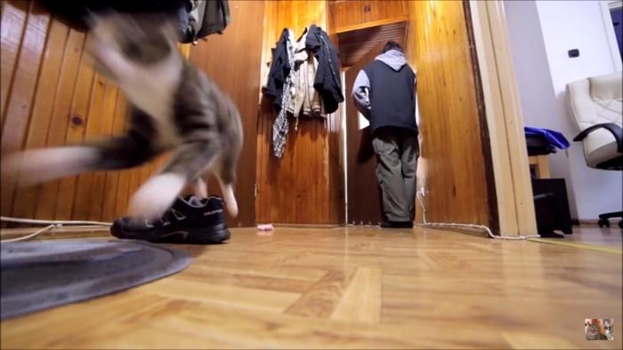 猛ダッシュの猫