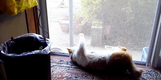 転がったまま足を網戸にかける猫