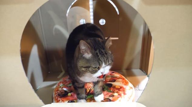 ピザのクッションを踏む猫