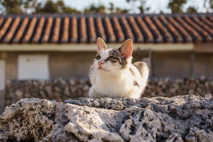 空を見ている猫