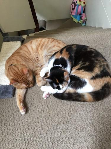 2匹が一緒に寝ている写真