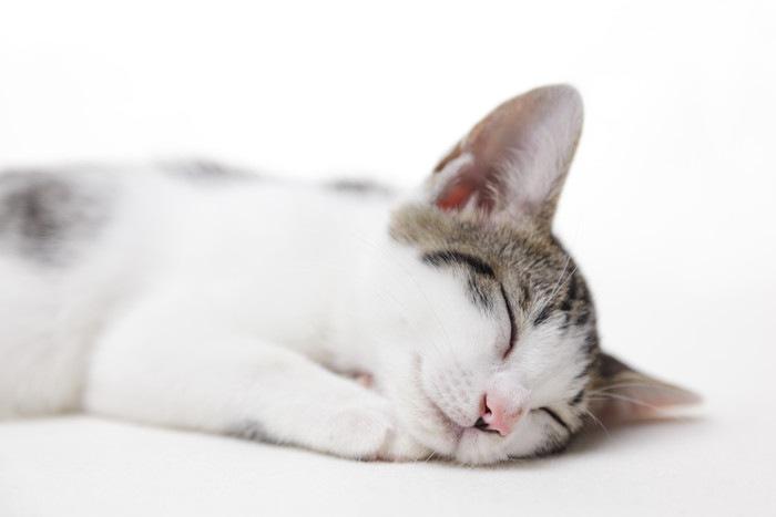 眠る猫の顔