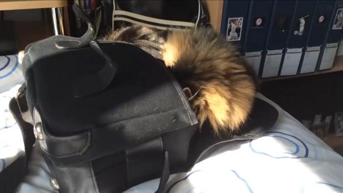 カバンに顔を突っ込む猫