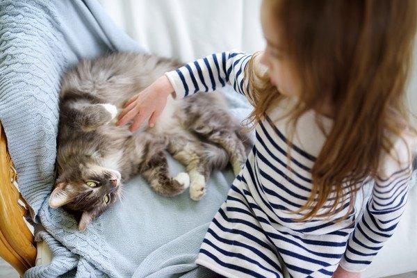 子供にお腹を撫でられる猫