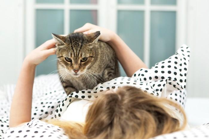 ベッドで眠る飼い主の上に乗る猫