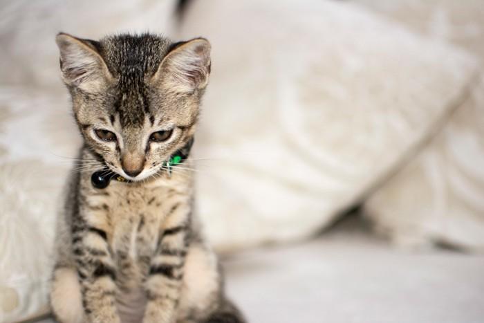 悲しげな表情でうつむく子猫