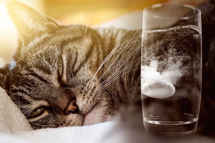 錠剤の入った水と眠る猫