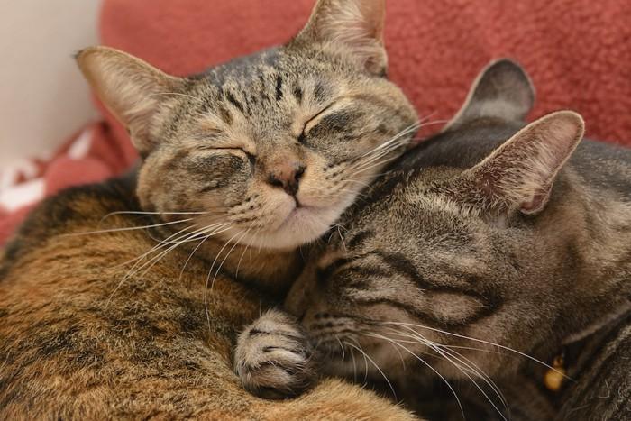 重なり合って眠る2匹の猫