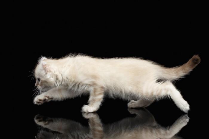 姿勢を低くして逃げる猫