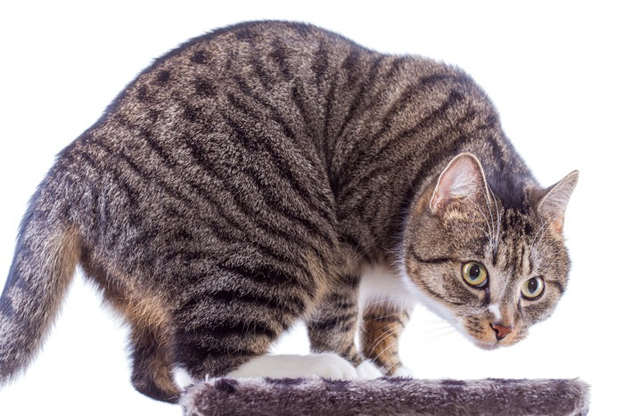 体を丸める猫