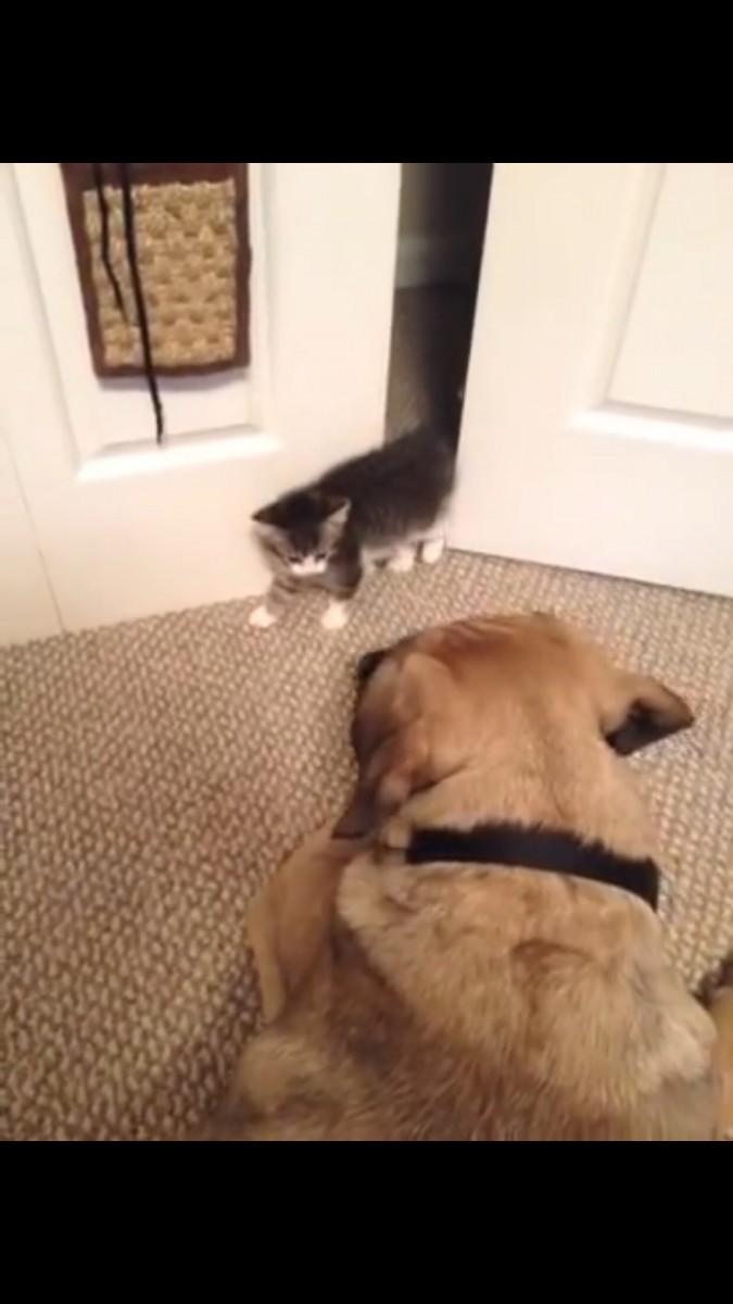 犬と目が合う猫