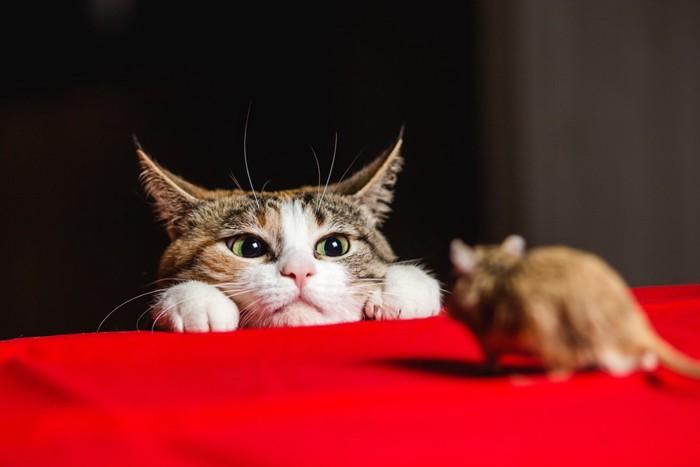ネズミと猫