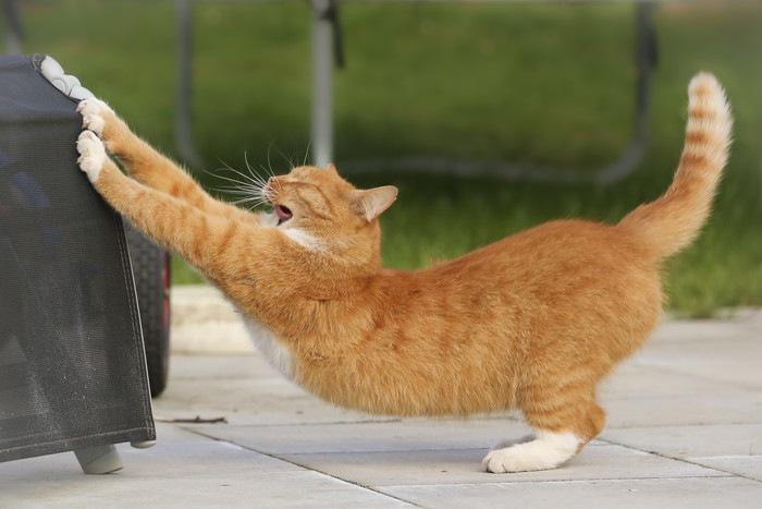 前足をかけてストレッチする猫