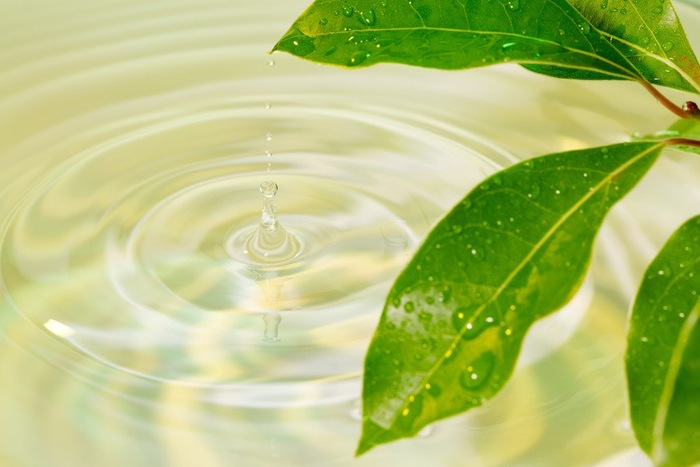 葉から落ちる水