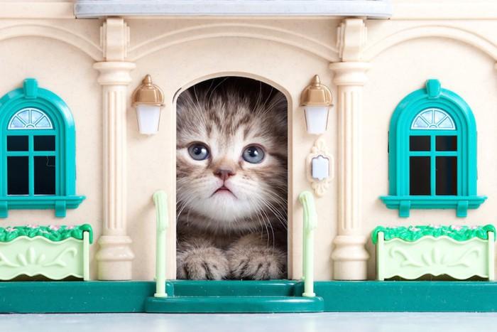 DIYした猫の家から顔を出す子猫
