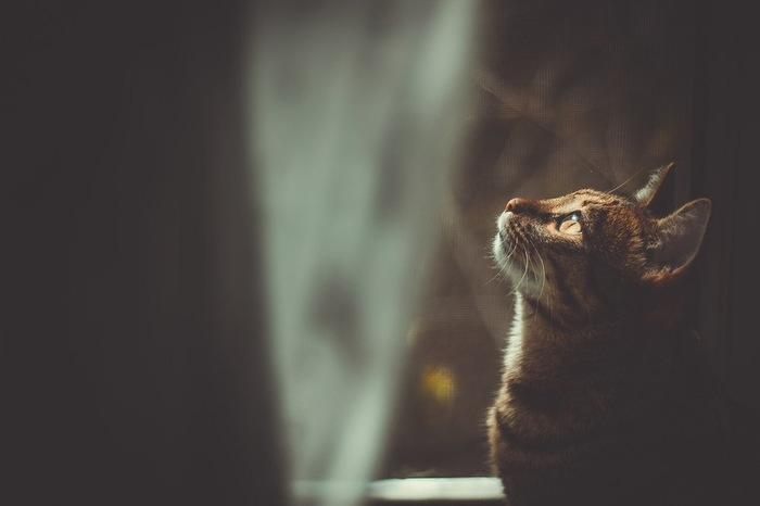 薄暗がりの中上を見る猫