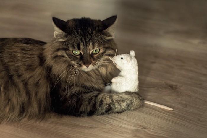 ネズミのおもちゃを抱える猫