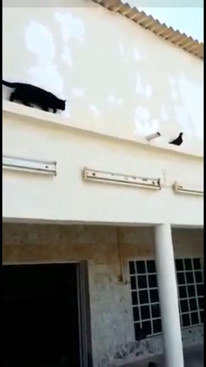 鳥を狙っているの猫