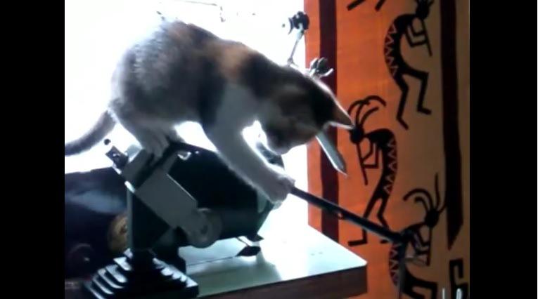 棒に右前足をかける子猫