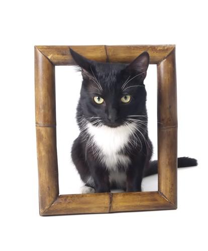 フレームに入る猫