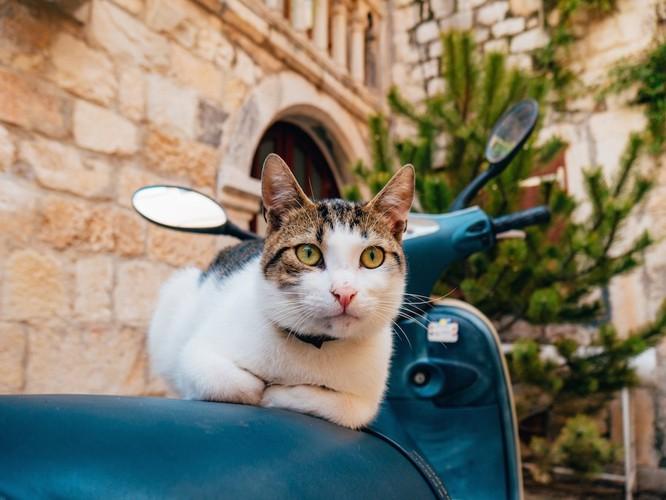 青いバイクに乗る猫