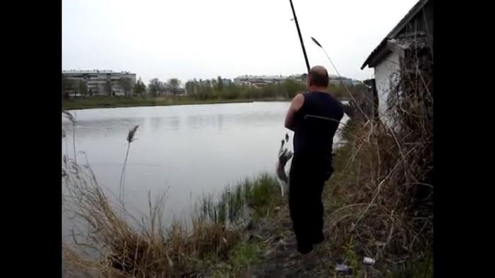 猫が魚に飛びつく