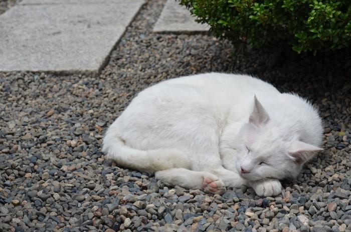 道路でお昼寝する猫