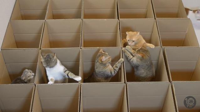 中央に集まる5匹の猫