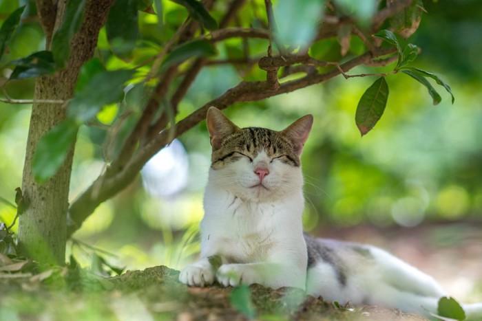日陰で休む猫