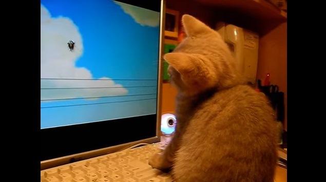 首を傾げる猫(遠くに鳥)