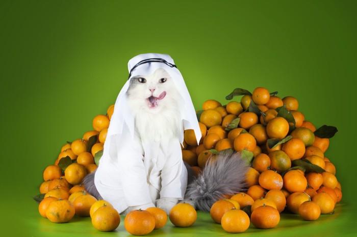 猫とオレンジ
