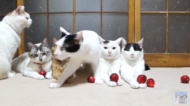 立ち去る中央の猫