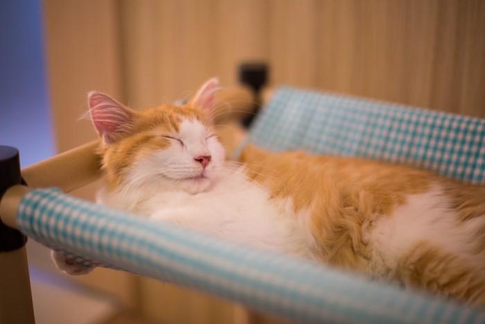 猫カフェのハンモックで寝る猫