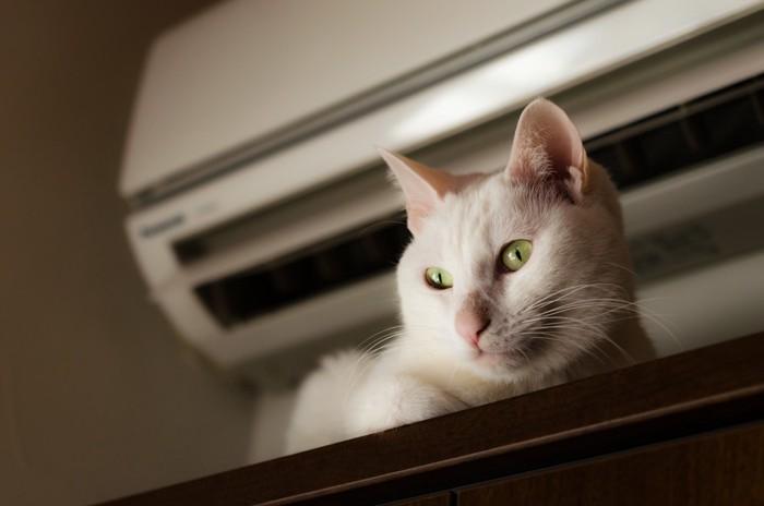 エアコンの下にいる白猫