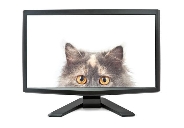 猫の顔が映っているモニター