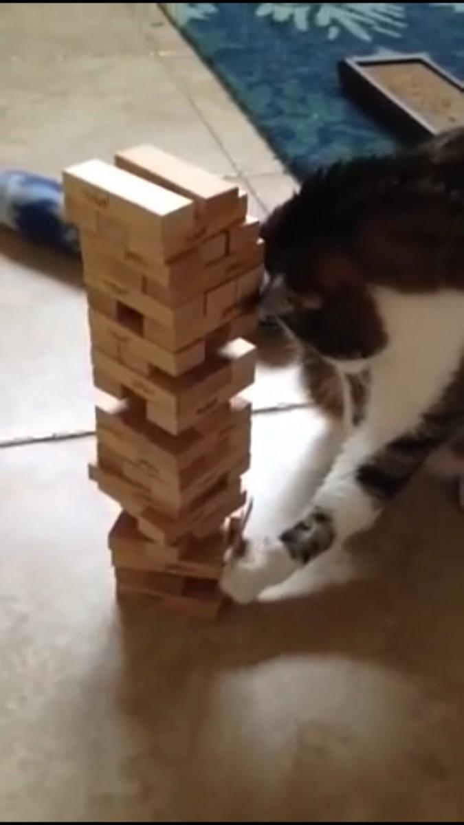 前足でずらす猫