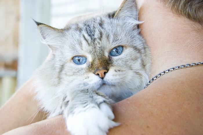 飼い主に抱かれたブルーの瞳の猫