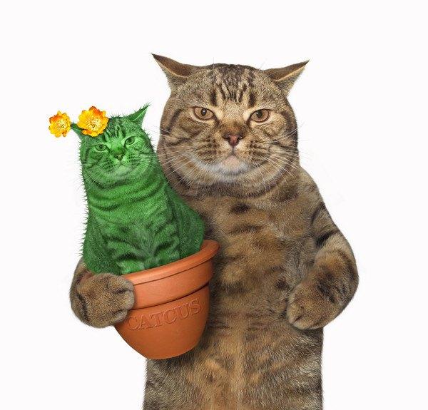 自分とそっくりな植木を持つ猫