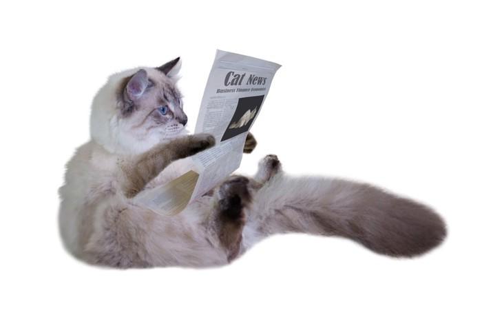 座りながら新聞を読む猫