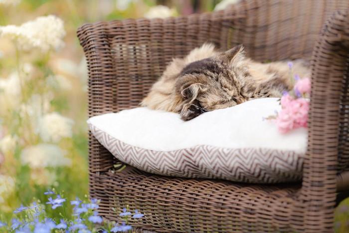 椅子の上のクッションの上で眠る猫