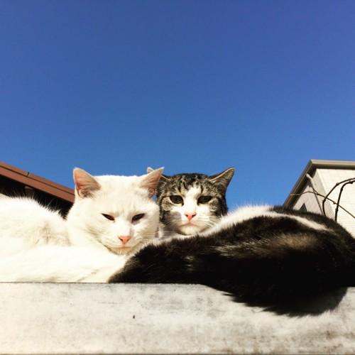 青空の下にいる2匹の猫
