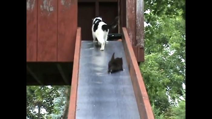 滑る別の子猫