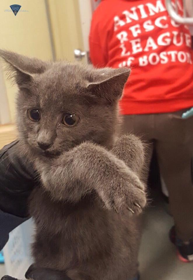 救出された子猫
